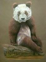 "Su Lin portrait VI, 2005, Colored pencil on paper, 20""x24"". Copyright Rebe Banasiak, The Brush Hilt and Banasiak Art Gallery."