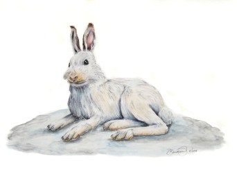 "The Year of the Rabbit (Arctic hare), 2008, Watercolor on paper, 9""x15"". Copyright Rebe Banasiak, The Brush Hilt and Banasiak Art Gallery."