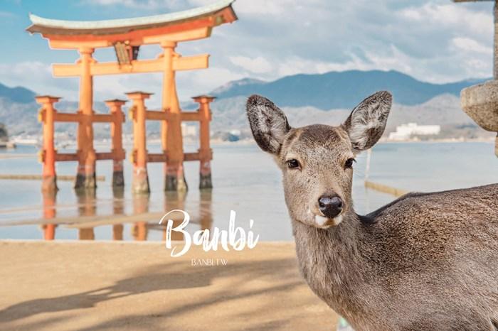 關於Banbi:合作與經歷、作品