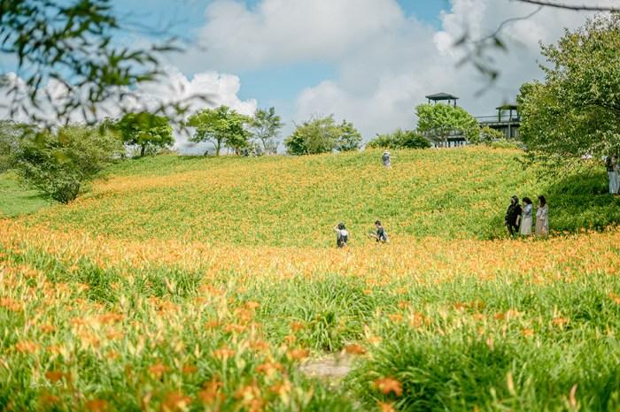 花蓮六十石山金針花季-8月滿山金針花開,把整座山染黃的金針花海