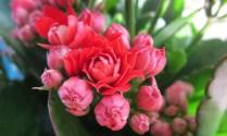 hoa sống đời kép