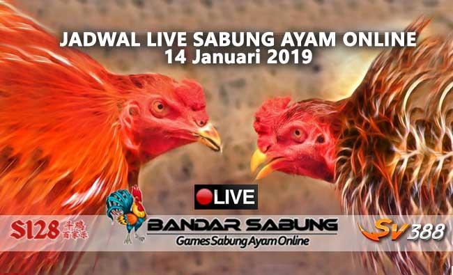 jadwal sabung ayam online s128 dan sv388 14 januari 2019