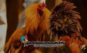 Jenis Sayuran untuk Ayam Petarung Unggul