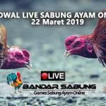 Jadwal Sabung Ayam Online S128 Dan SV388 22 Maret 2019