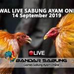 Jadwal Sabung Ayam Online S128 Dan SV388 14 September 2019