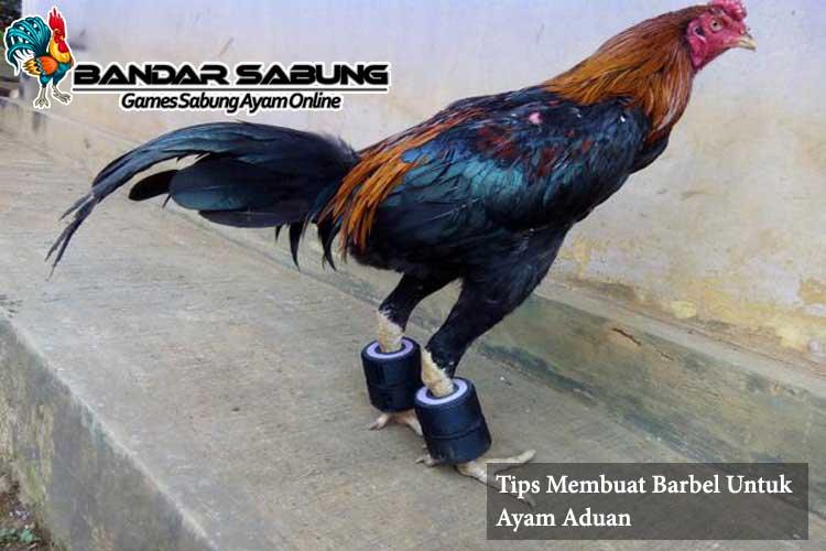 Tips Membuat Barbel Untuk Ayam Aduan