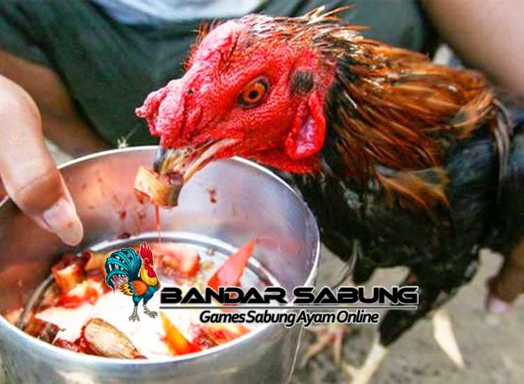 Cetak Ayam Bangkok Juara - Sabung Ayam Online