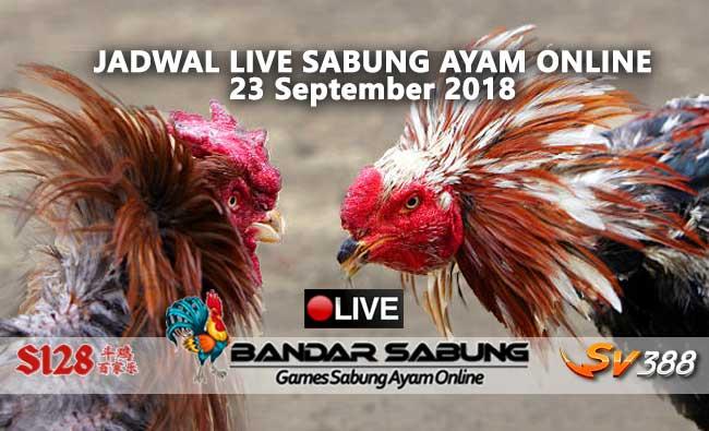 jadwal sabung ayam online s128 dan sv388 23 september 2018