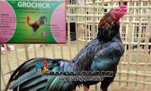 Vitamin untuk Bulu Ayam Hias Yang Baik Untuk Perawatan Ayam Hias