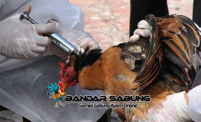 Cara Mencegah Virus Menyerang Ayam