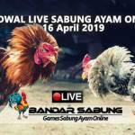 Jadwal Sabung Ayam Online S128 Dan SV388 16 April 2019