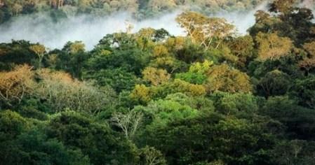 Foto: reprodução/Via Rural
