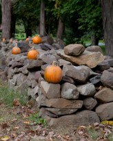 Stone fence with pumpkins (19351v)
