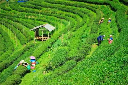 Dünyanın En Çok Çay İçen 10 Ülkesi