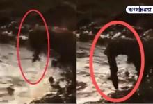 Photo of হরিণ শিকার ছেড়ে মাছ ধরছে চিতাবাঘ! মুহূর্তে ভাইরাল ভিডিও