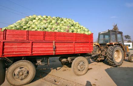 Renasc cooperativele. Record cu 280 de înfiinţări în 2018. Cooperativele agricole şi-au dublat afacerile în trei ani şi au ajuns la 1,3 mld. lei în 2018