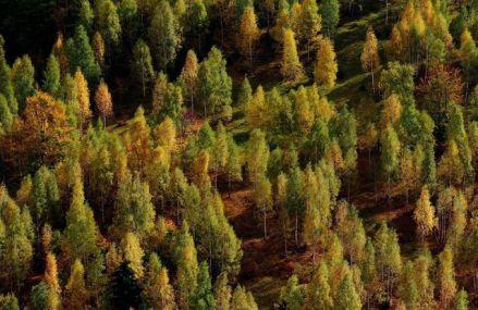 O veste bună: Suprafaţa pădurilor din România a crescut cu peste 9.000 ha în 2019