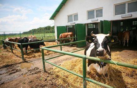 Agrobusiness. Radu Dumitru, un tânăr de 30 de ani din Braşov, a preluat businessul cu bovine al părinţilor şi investeşte 1,7 mil. euro într-o nouă fermă
