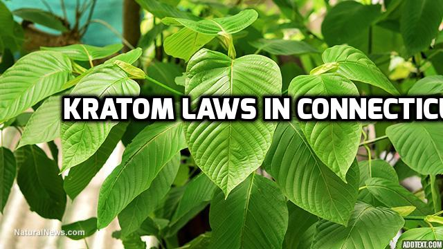 Kratom Laws In Connecticut