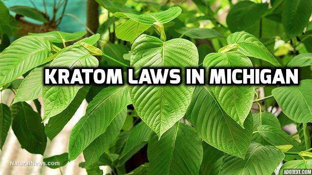 Kratom Laws In Michigan
