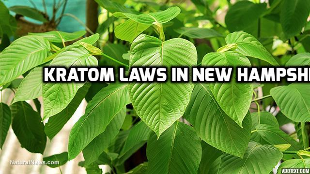 Kratom Laws In New Hampshire