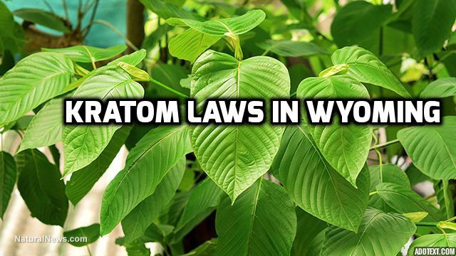 Kratom Laws In Wyoming