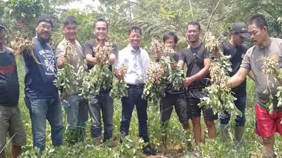 Wakil Walikota Tangerang Panen Kacang Tanah di Banksasuci