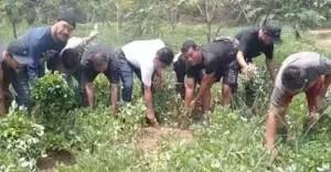 Panen Kacang Tanah di Banksasuci Tangerang