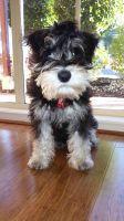 Banksia Park Puppy Review Fritz
