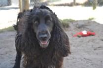 banksia-park-puppies-sand5