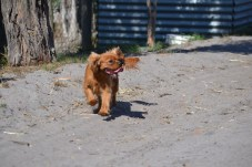 Banksia Park Puppies Playgrounds - 1 of 25 (3)