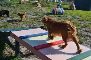 ADULT AGILITY PARK- Banksia Park Puppies - 3 of 117
