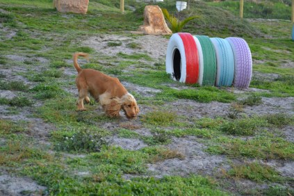 ADULT AGILITY PARK- Banksia Park Puppies - 87 of 117