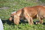 banksia-park-puppies-jazz-20-of-41