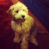 Banksia Park Puppy Review Ella