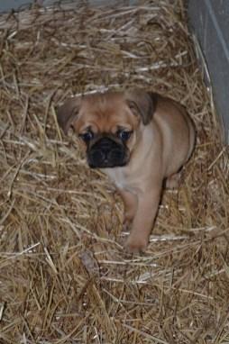 puppy banksia park puppies