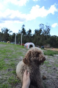 Banksia Park Puppies Ayasha - 26 of 36