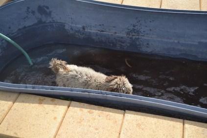 Banksia Park Puppies Ayasha - 28 of 36