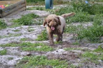 Banksia Park Puppies Ayasha - 31 of 36