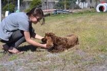 Banksia Park Puppies Bridey - 1 of 16 (12)