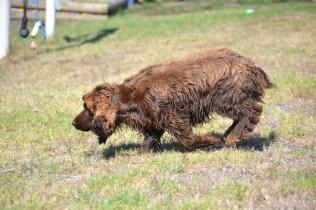 Banksia Park Puppies Bridey - 1 of 16 (9)