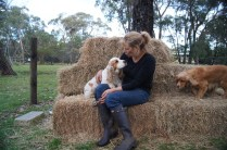 Banksia Park Puppies Patch