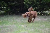 Banksia Park Puppies Ralph
