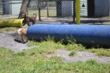 Banksia Park Puppies Tinker
