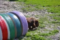 Banksia Park Puppies Walida - 13 of 26
