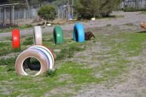 Banksia Park Puppies Walida - 4 of 26