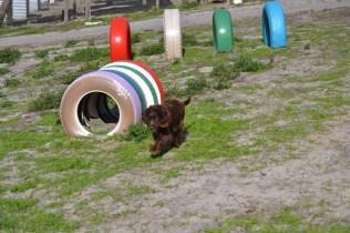 Banksia Park Puppies Walida - 6 of 26