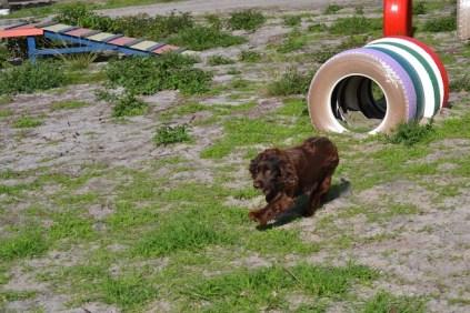 Banksia Park Puppies Walida - 7 of 26