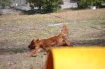 Banksia Park Puppies_Moo Moo