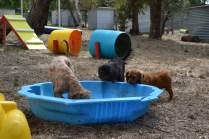 Banksia Park Puppies_Rosana